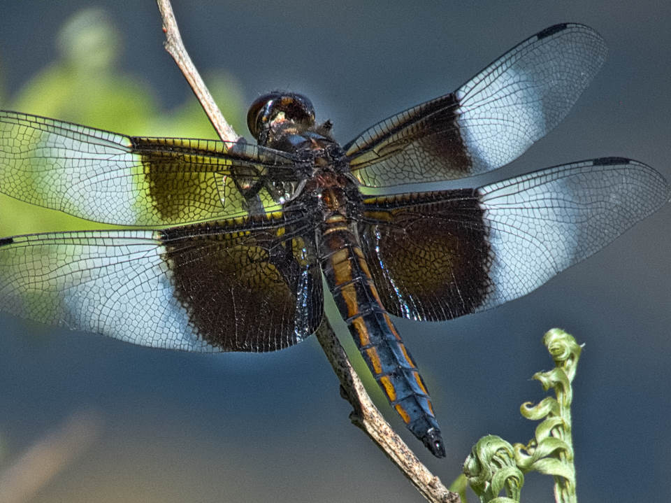 Photography dragonfly 06.08.19
